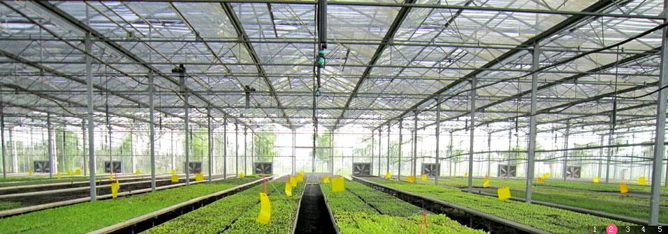 植物单屋面温室手绘图
